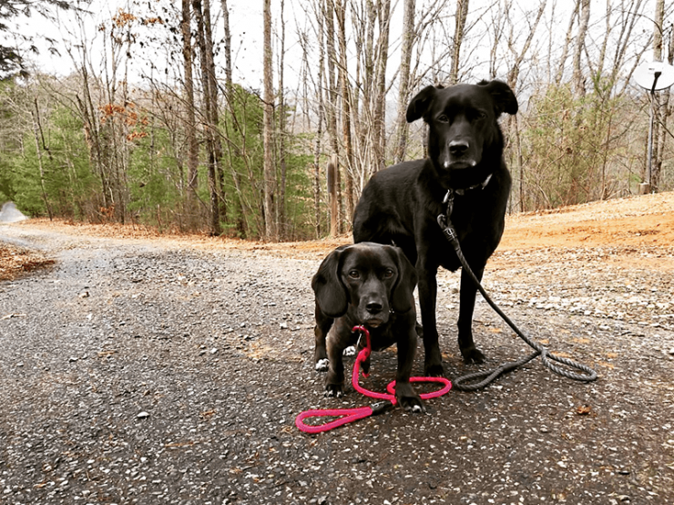 dog-friendly-hiking-nc-isabella-and-penelope-2.png