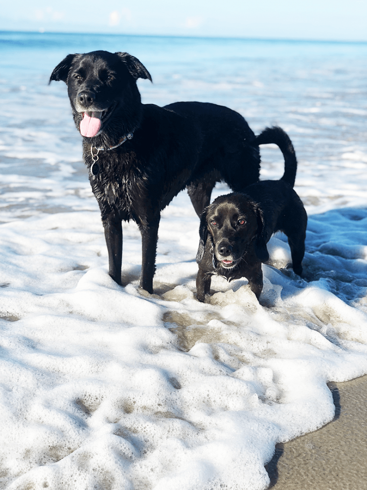 isabella-and-penelope-emerald-isle-beach-nc-1.png